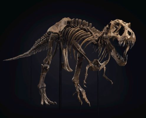Christie's Auctions | The life and times of STAN – one of the most complete T. Rex skeletons ever found